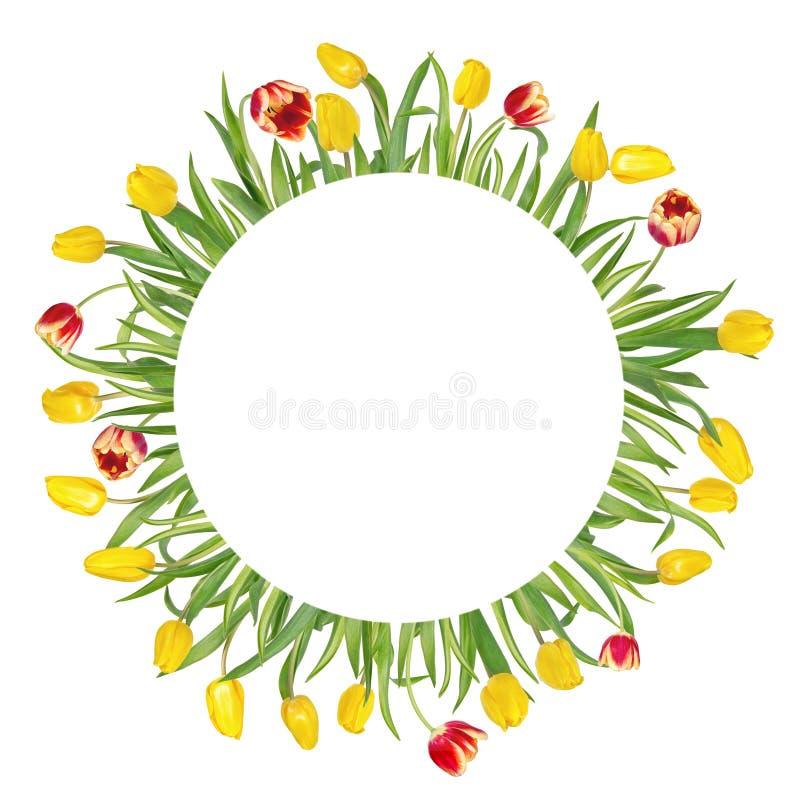 Круговая флористическая рамка сделанная красивых красных и желтых тюльпанов на длинных стержнях с зелеными листьями r стоковые фото