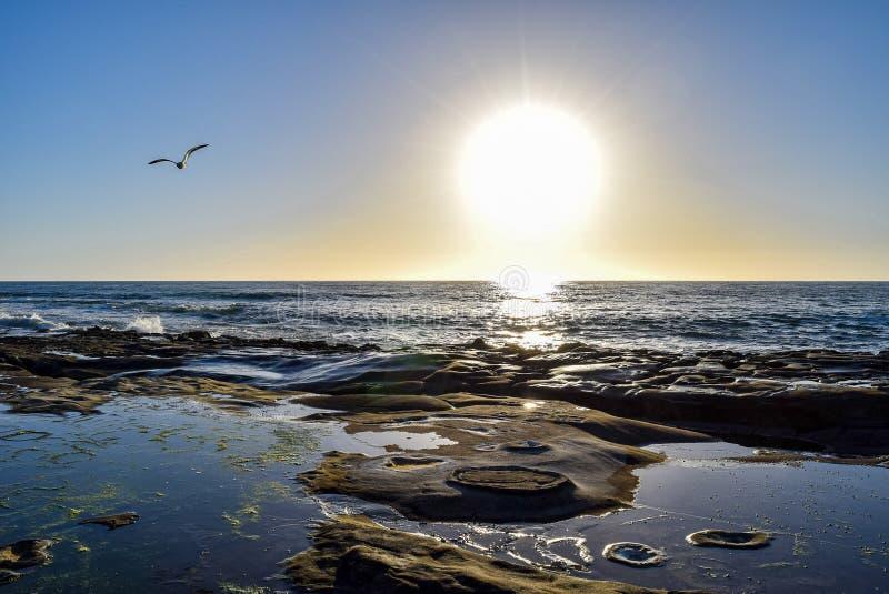 Круговые картины утеса и чайка на заходе солнца в La Jolla, Калифорнии стоковые изображения
