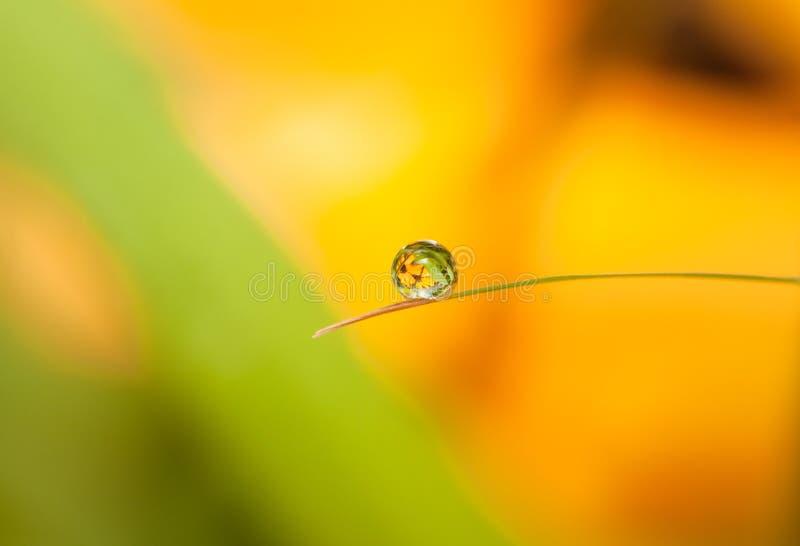 Круглая капля росы (капелька) с отражением цветка на меньших лист стоковые изображения