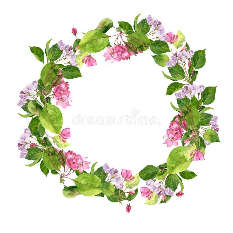 Круглая флористическая рамка с розовыми цветками яблони иллюстрация штока