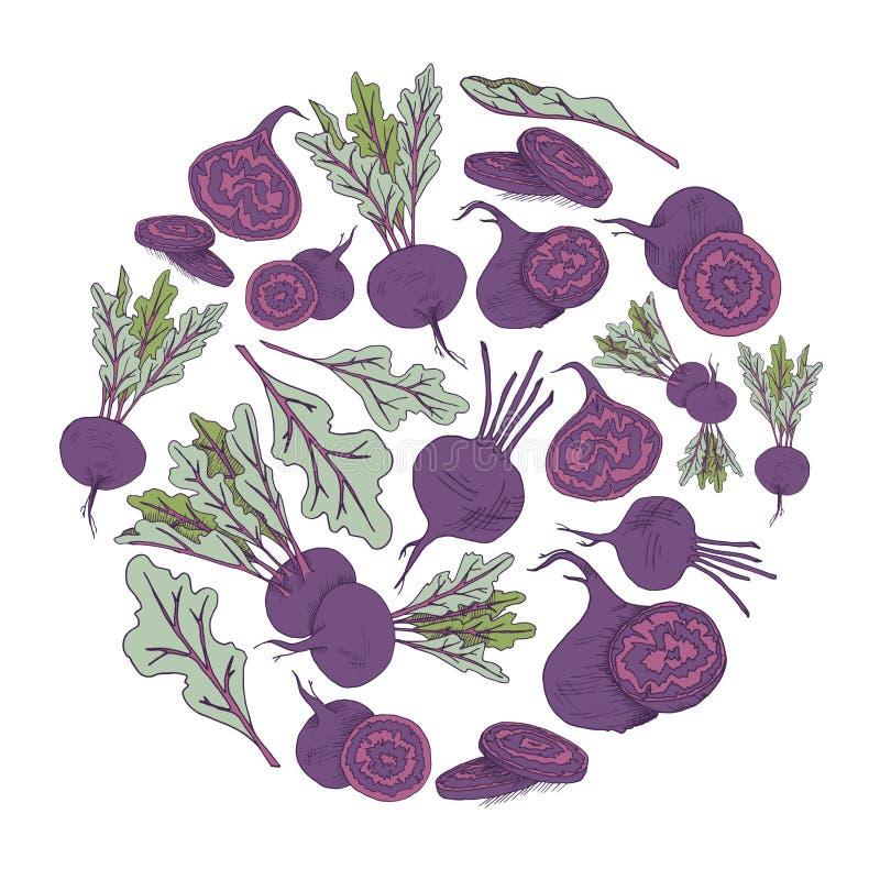 Круг вектора с предпосылкой круга руки овоща корня свеклы вычерченной с едой иллюстрация штока