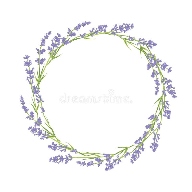 Круг цветков лаванды бесплатная иллюстрация