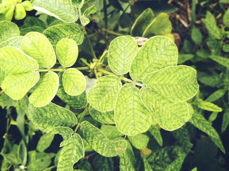 Круглые листья предела стоковое фото