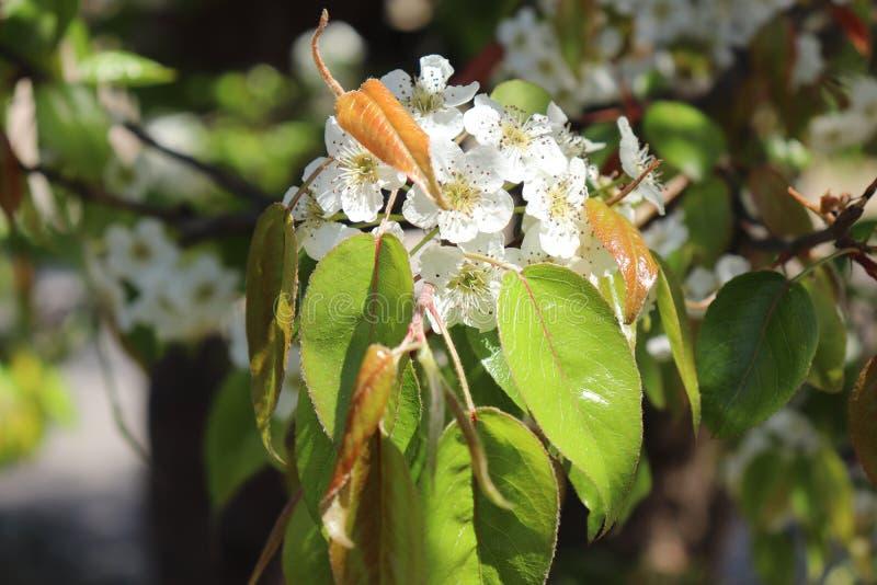 Крупный план белого floret джунглей стоковые фотографии rf