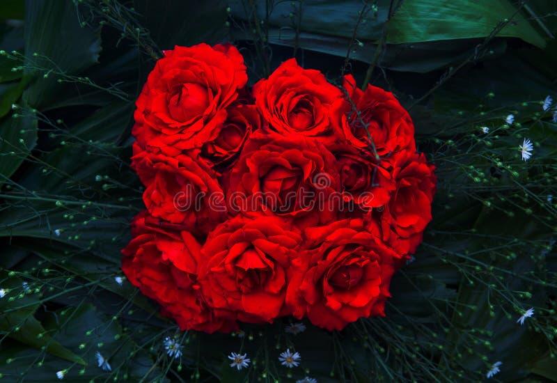 Крупный план букета красной розы Живое флористическое фото текстуры Розовые цветки в зеленых листьях Романтичный шаблон знамени стоковые фотографии rf