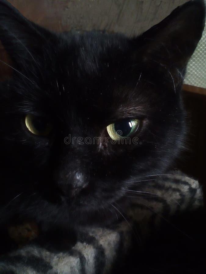 Крупный план головы черного кота Черный кот с желтыми глазами внутри помещения стоковая фотография rf