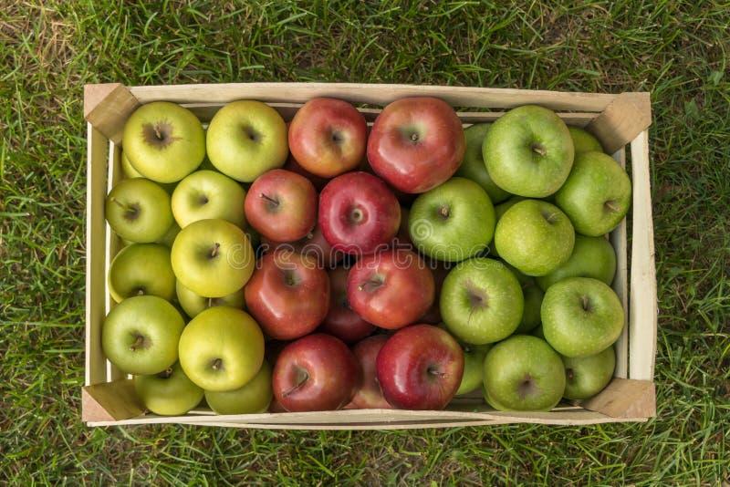 Крупный план клети с свежими яблоками на траве: Золотой - очень вкусный, торжественный, бабушка Смит стоковое фото