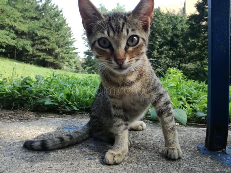 Крупный план кота младенца стоковая фотография rf