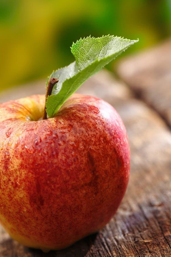 Крупный план красного яблока с одиночными листьями стоковое фото rf