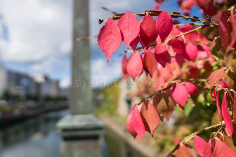 Крупный план листьев осени в саде стоковые фотографии rf