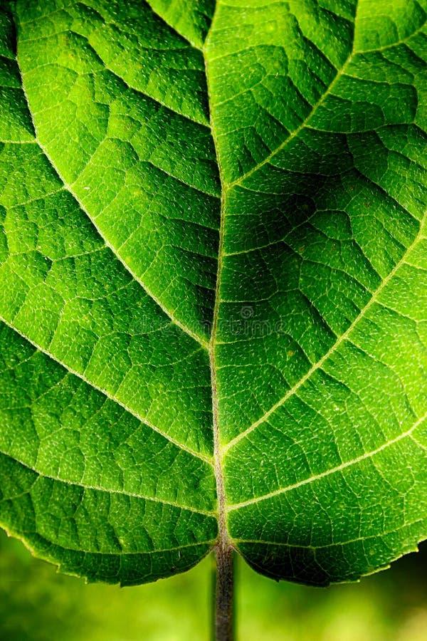 Крупный план листьев стоковая фотография rf
