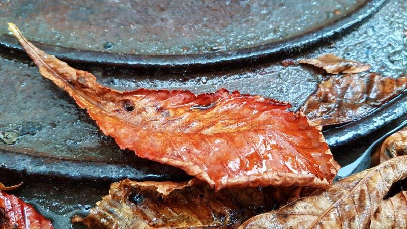 Крупный план лист яркого оранжевого цвета влажный на грязной предпосылке поверхности металла стоковые изображения