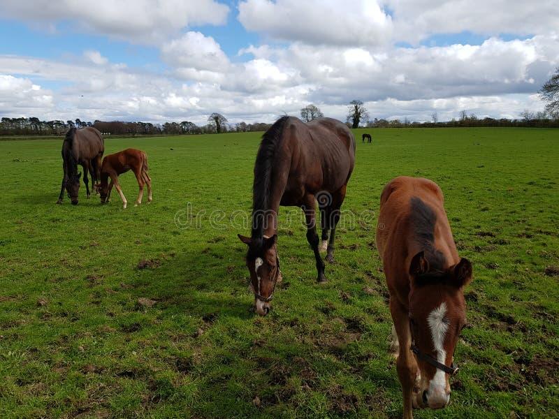 Крупный план лошади стоковые фото