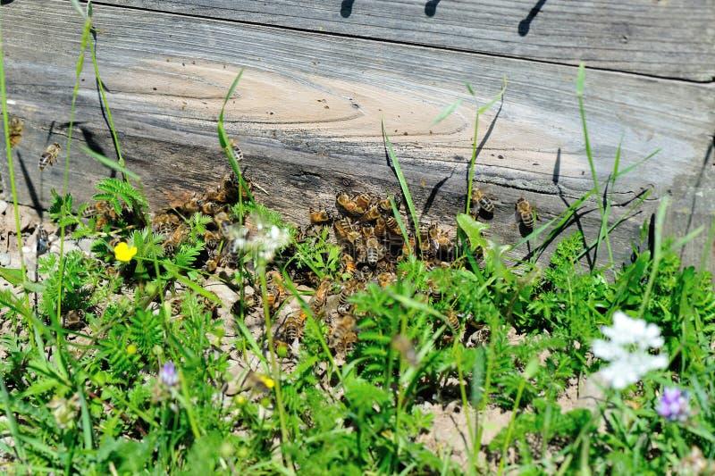 Крупный план много занятых пчел стоковые изображения rf