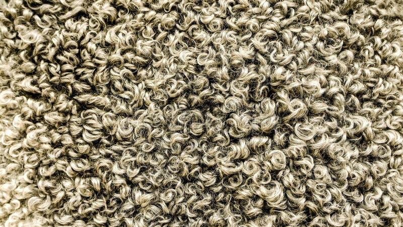 Крупный план овец шерстей стоковая фотография