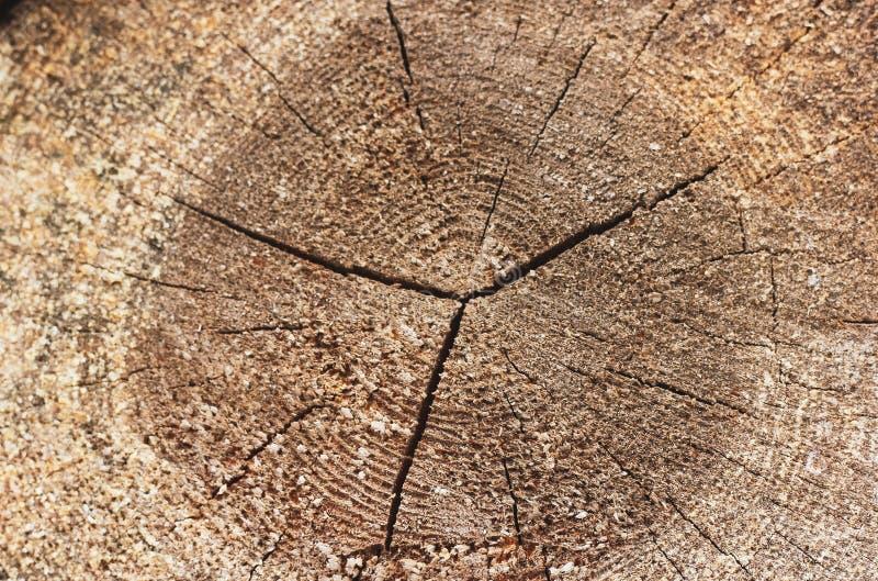 Крупный план одиночным журнала отрезанного кругом деревянного стоковое фото