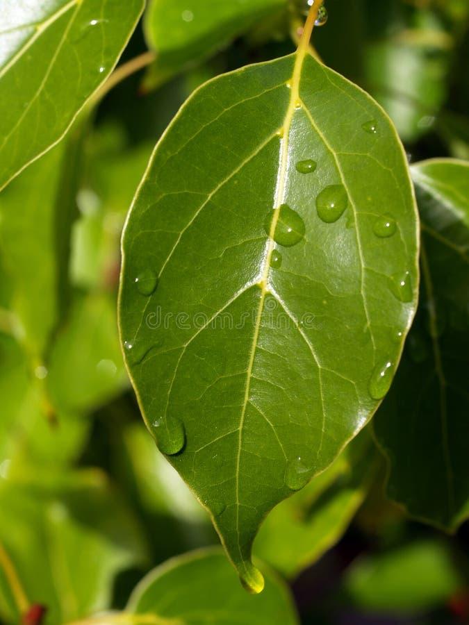 крупный план падает зеленая вода листьев стоковые фотографии rf