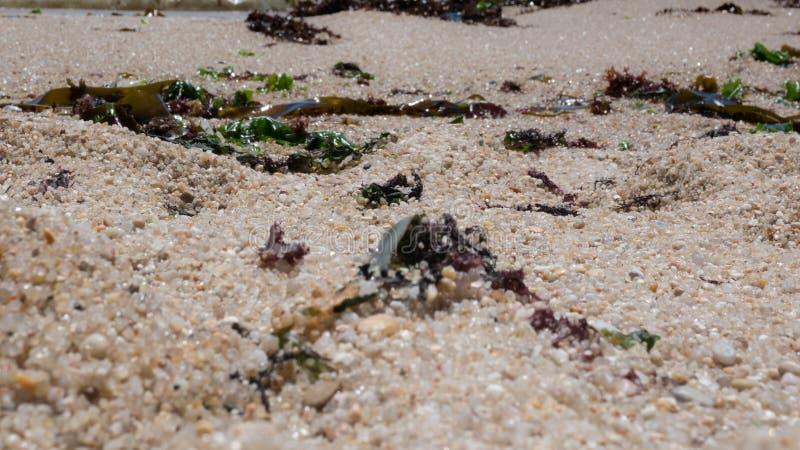 Крупный план песчинок на пляже при морская водоросль посыпанная через песок стоковое изображение