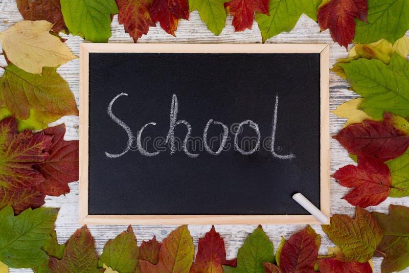 крупный план предпосылки осени красит красный цвет листьев плюща померанцовый Классн классный и мелок Школа надписи бесплатная иллюстрация