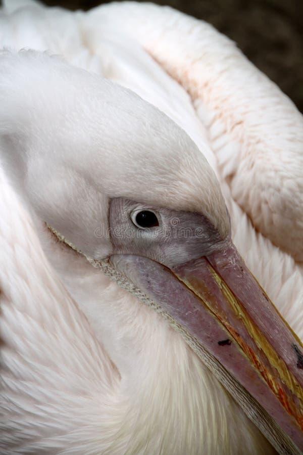 Download Крупный план птицы стоковое фото. изображение насчитывающей closeup - 18385882