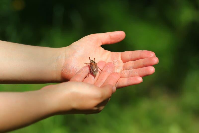 Крупный план рук ` s женщины и жук-чефер июнь прослушивают стоковое фото rf