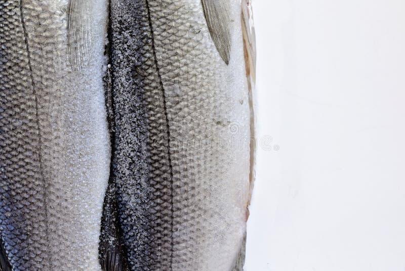 Крупный план рыб моря на белой предпосылке стоковые фотографии rf