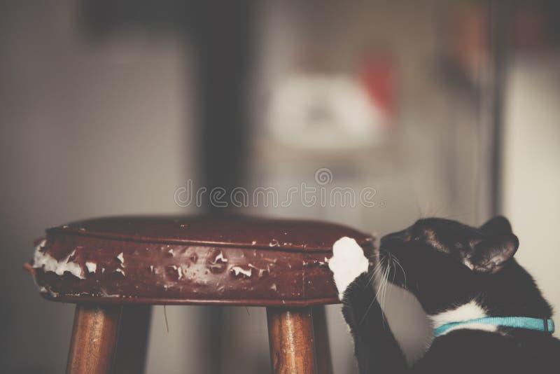 Крупный план снятый черной меховой домашней кошки царапая табуретку стоковые изображения