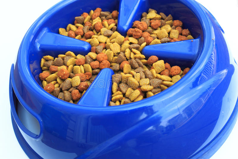 Крупный план собачьей еды стоковое изображение rf