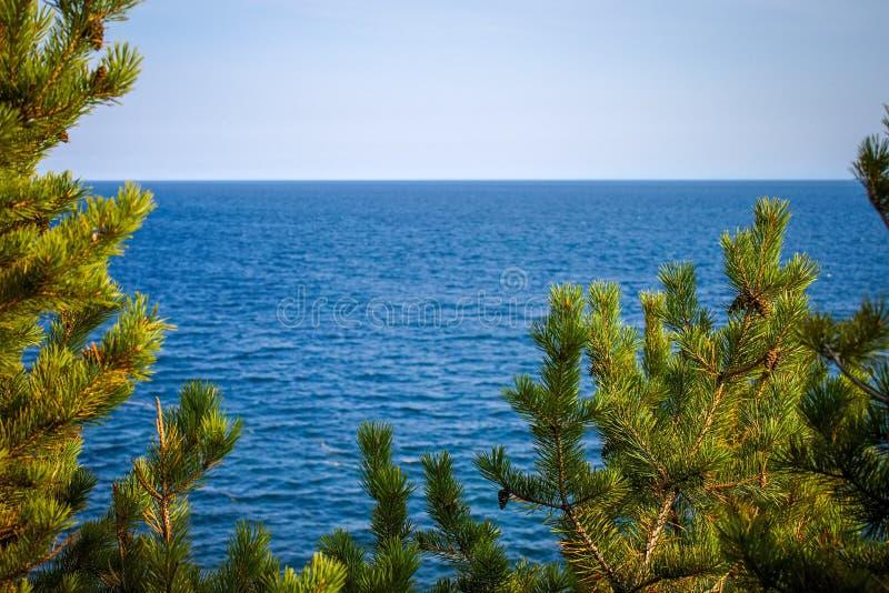 Крупный план сосен на предпосылке моря стоковое изображение rf