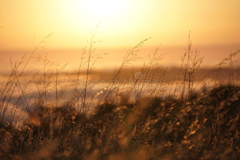 Крупный план сухого желтого поля травы с запачканным горизонтом на заднем плане на Mt Tam в Marin CA стоковые изображения rf