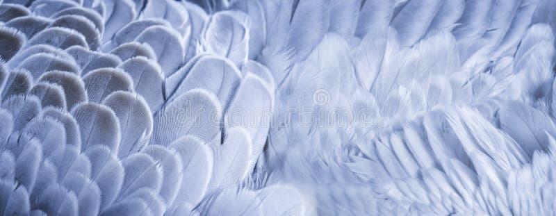 Крупный план текстуры пер стоковая фотография