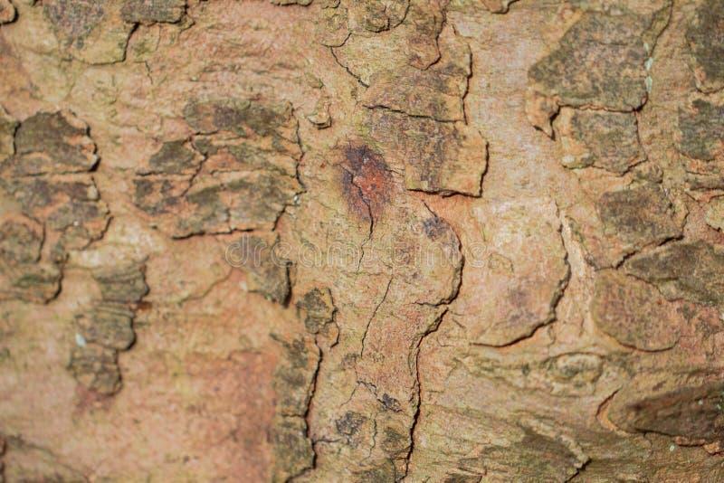 Крупный план текстуры предпосылки коры дерева стоковые фото