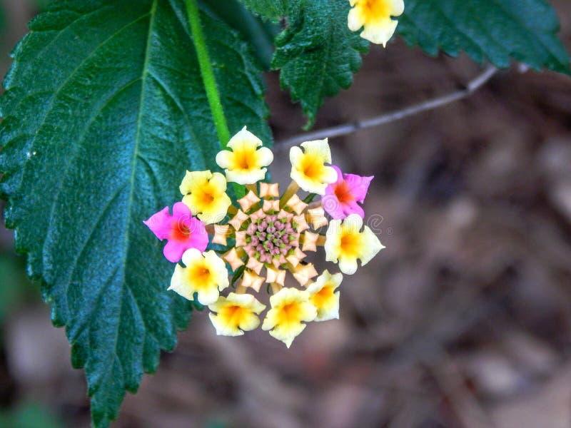Крупный план цветка стоковое изображение