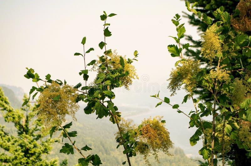 Крупный план wildflowers вдоль следов ущелья Колумбии, Орегона стоковое изображение