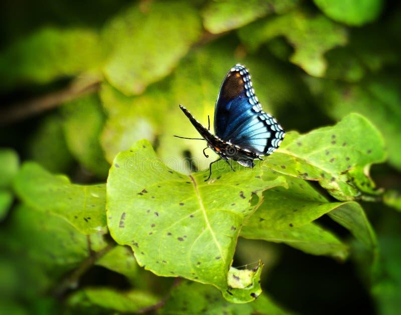 Крупный план бабочки на лист стоковая фотография rf