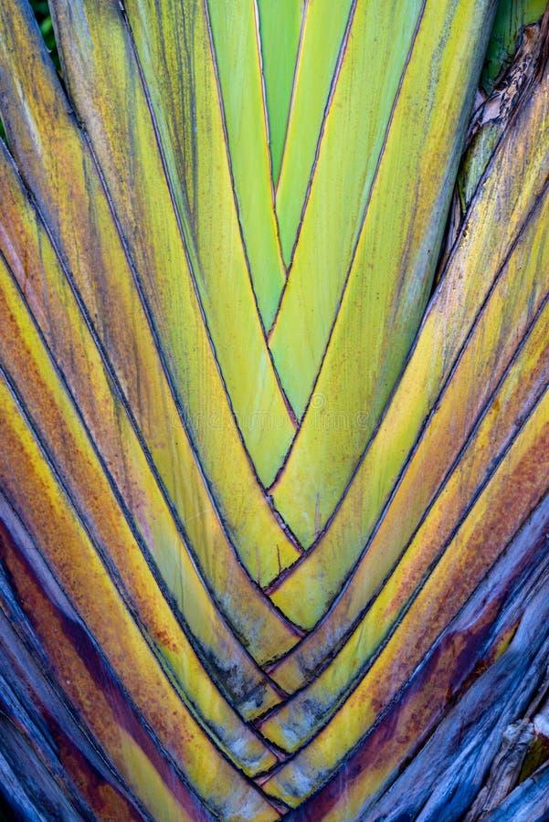 Крупный план бананового дерева стоковое фото