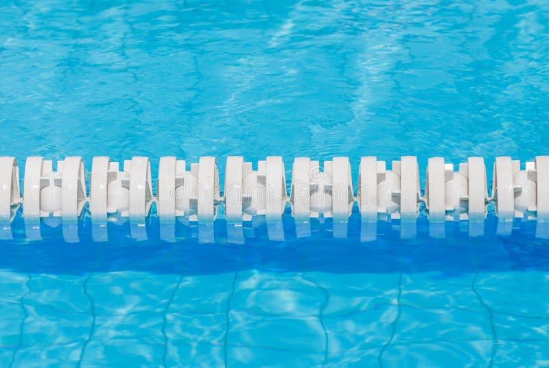 Крупный план белые маркированные майны в бассейне для конкуренций стоковое фото rf