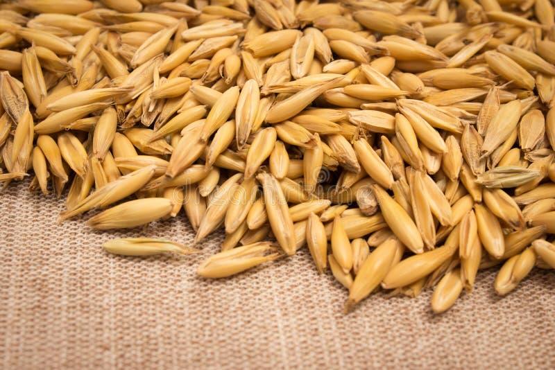 Крупный план зерна овса стоковые изображения rf