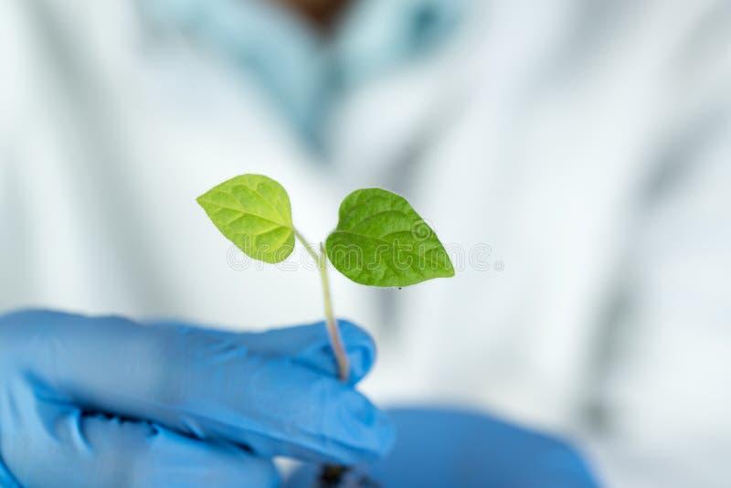 Крупный план зеленого растения в руке ученого стоковое изображение