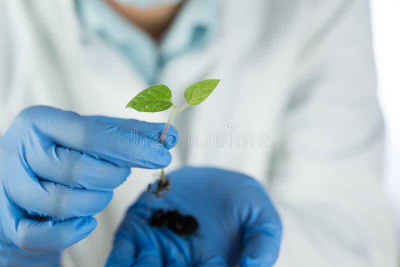 Крупный план зеленого растения в руке ученого стоковые изображения