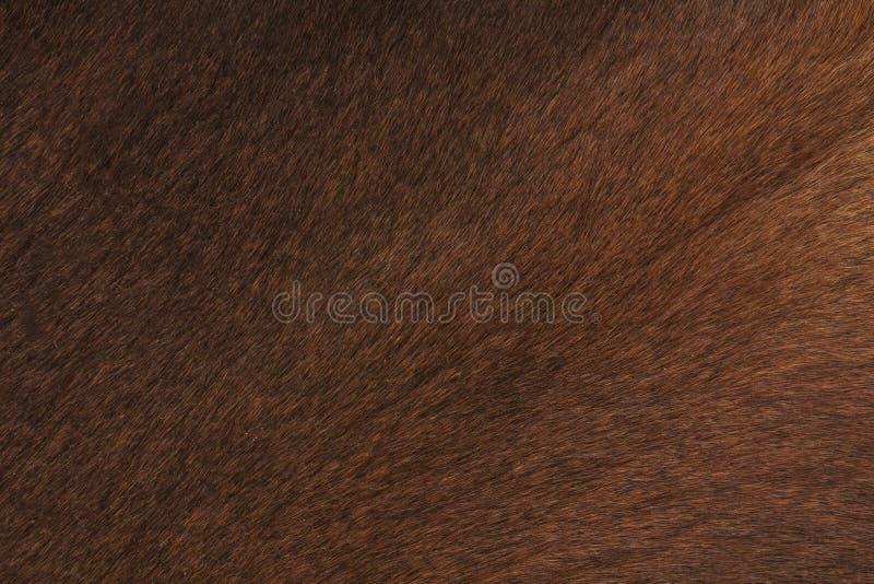 Крупный план кожи коровы стоковые фото