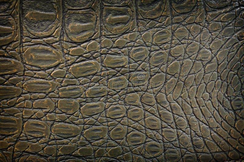 Крупный план крокодила кожаный стоковые изображения rf