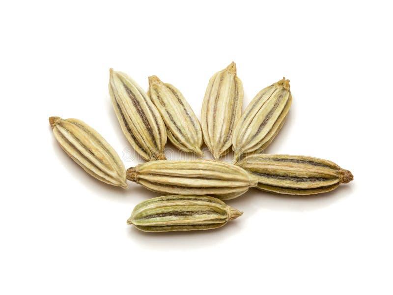 Крупный план макроса органических семян фенхеля стоковое фото