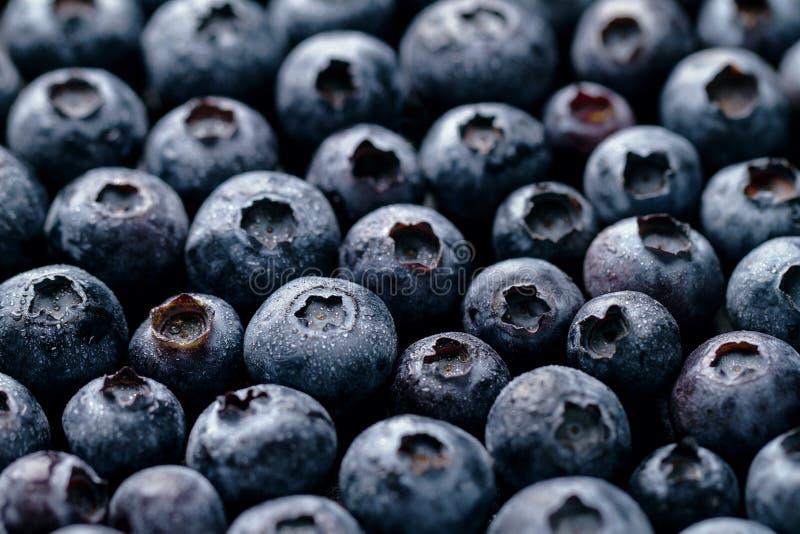 Крупный план макроса свежей вкусной ягоды голубики Еда лета Питание стоковые фотографии rf