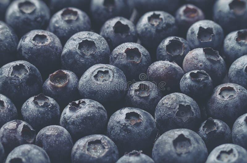 Крупный план макроса свежей вкусной ягоды голубики Еда лета Питание стоковые фото