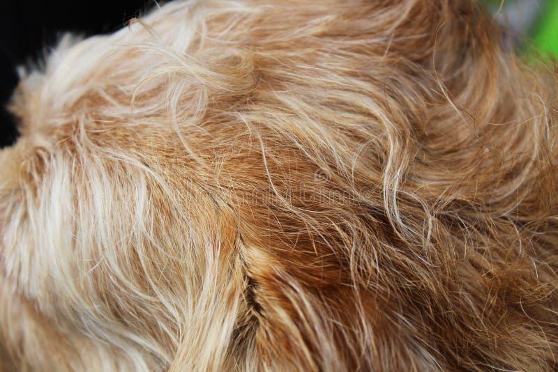 Крупный план меха shaggy собак стоковые изображения rf