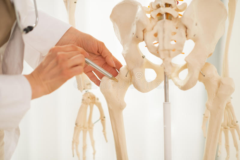 Крупный план на женщине врача указывая на бедренную кость стоковое изображение rf