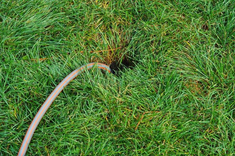 Крупный план на спринклере прикрепленном к шлангу моча двор травы Деталь оросительной системы сада для моча лужайки стоковая фотография rf