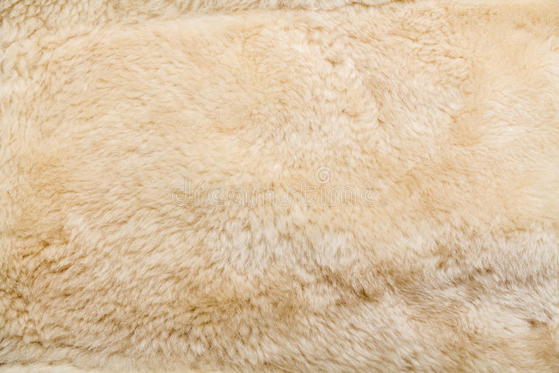 Крупный план овец шерстей стоковое изображение
