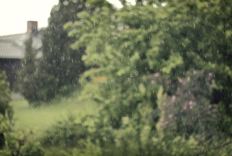 Крупный план дождя стоковые изображения